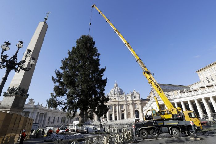 A crane lifts up a Christmas tree to be placed in St. Peter's Square, at the Vatican, Thursday, Nov. 23, 2017. The tree, a 28 metre high red fir, arrives from the archdiocese of Elk, in north-eastern Poland. (AP Photo/Andrew Medichini)